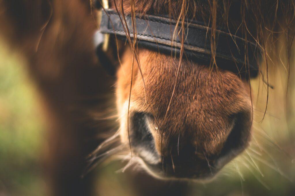 Køb og salg af heste i trygge rammer
