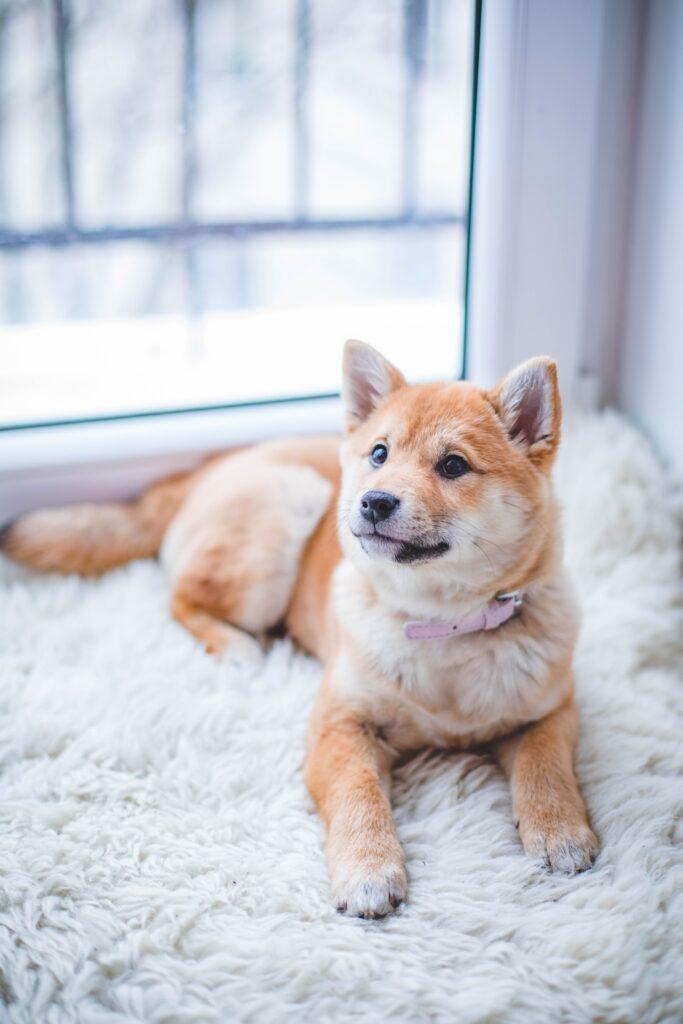 Hvordan holder jeg min hund sund og rask? – læs mere her
